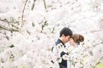 満開の桜の中で幸せのフォトウェディング|滋賀県彦根城にて