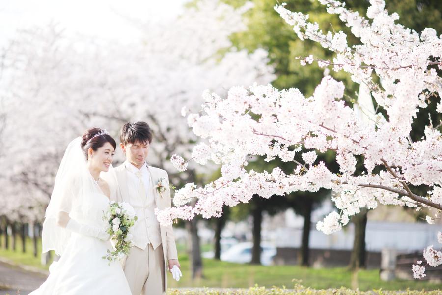 春にしかとれない!桜との前撮りはいかがですか?ご予約はお早めに!