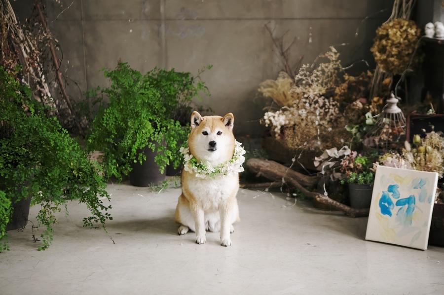 愛犬も一緒にスタジオフォトウエディング