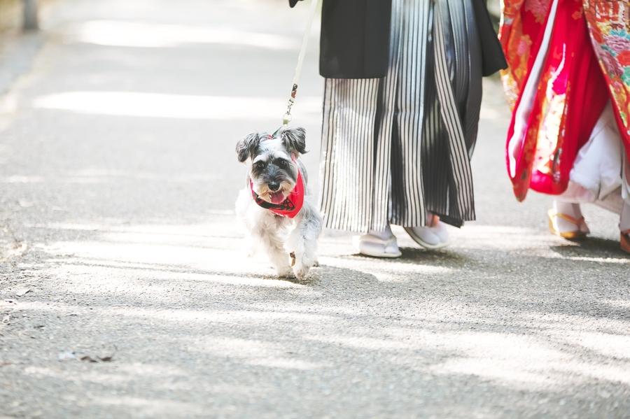 愛犬と一緒に前撮りできるのも滋賀ブライダルフォトワークス
