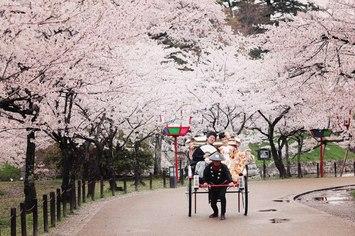 【人気】桜プランご紹介します!桜シーズンのご予約はお早めに