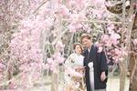 【大人気】桜ロケーションフォトウェディングの予約はお早目に