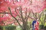 [おすすめ]滋賀で人気の紅葉フォトウエディング