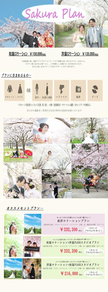 フォトウエディングはやっぱり桜シーズンが人気!!